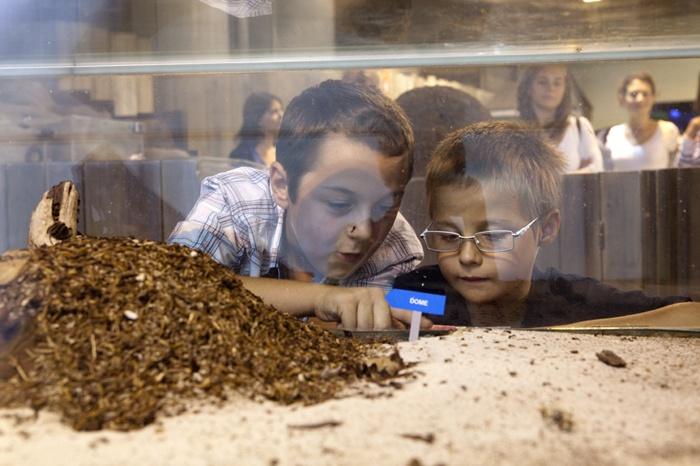 Les fourmis(ouverture du diaporama)