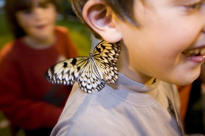 Papillon(ouverture du diaporama)