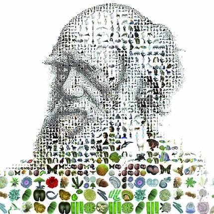Darwin : penser le vivant autrement - Saison 2015-2016 - Saisons -  Conférences en ligne - Ressources - Cité des sciences et de l'industrie