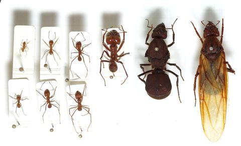 sur la piste des fourmis des insectes formidables doc. Black Bedroom Furniture Sets. Home Design Ideas