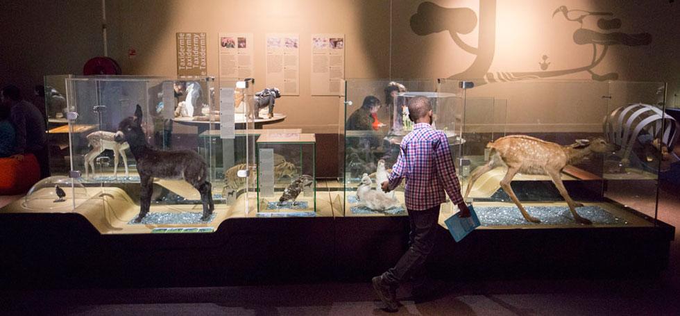 L 39 exposition b b s animaux l expo pour les 2 7 ans - Image bebe animaux ...